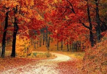 Il mondo si veste di autunno